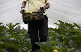Voucher in agricoltura